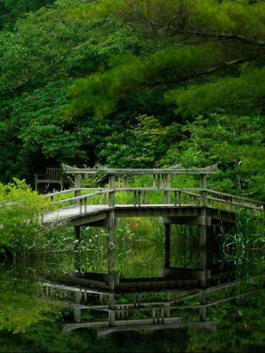 Lake Forest Bridge Nature Garden Wallpaper 1536x2048 380x507