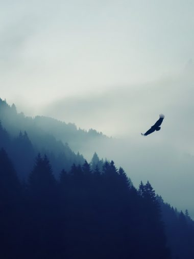Nature Mountain Eagle Fog Wallpaper 1536x2048 380x507