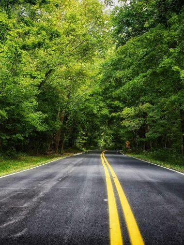 Road Forest Trees Landscape Wallpaper 1536x2048 380x507