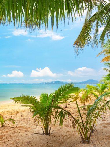 Sand Sea Sky Palm Trees Nature Wallpaper 1536x2048 380x507