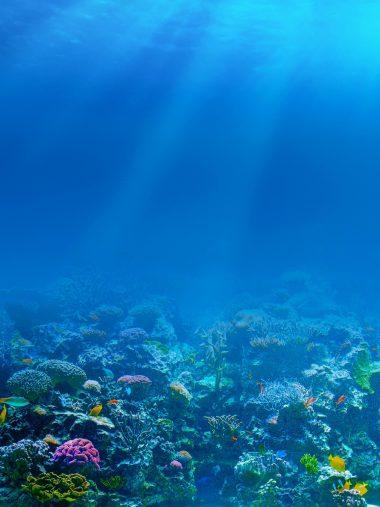 Sea Underwater Corals Fishes Wallpaper 1536x2048 380x507