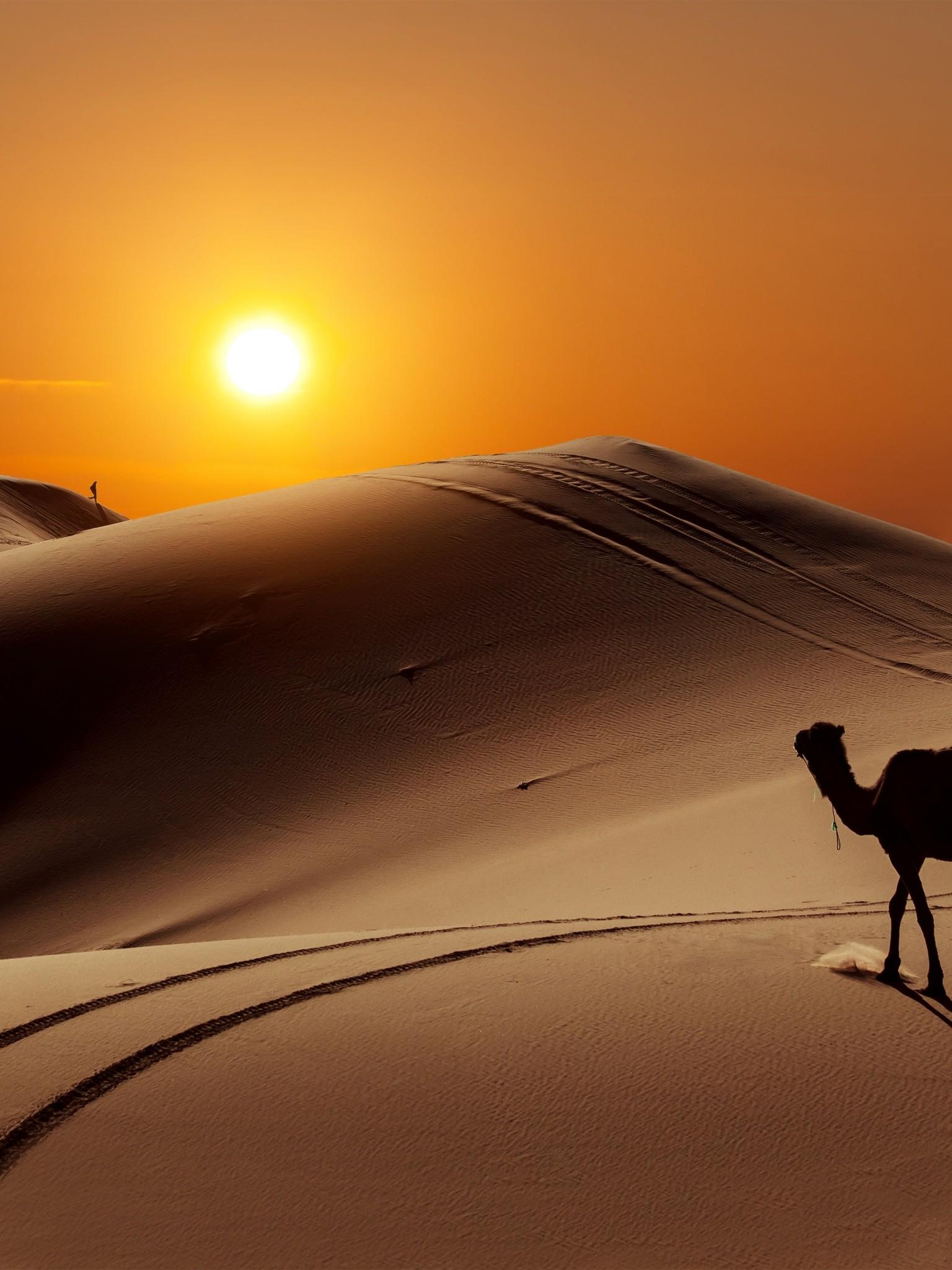 Sun People Desert Camel Wallpaper 1536x2048