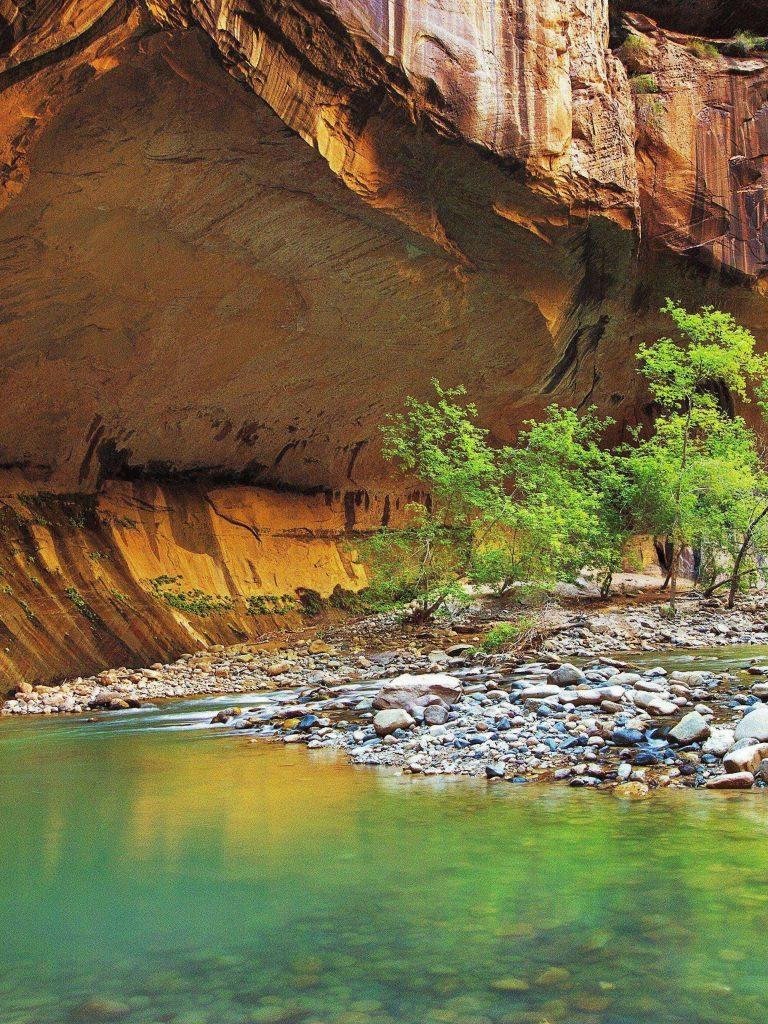 Zion Narrows Rock River Trees Landscape Wallpaper 1536x2048 768x1024
