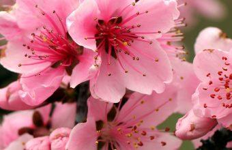 Apple Tree Bright Spring Pink 1440x2880 340x220