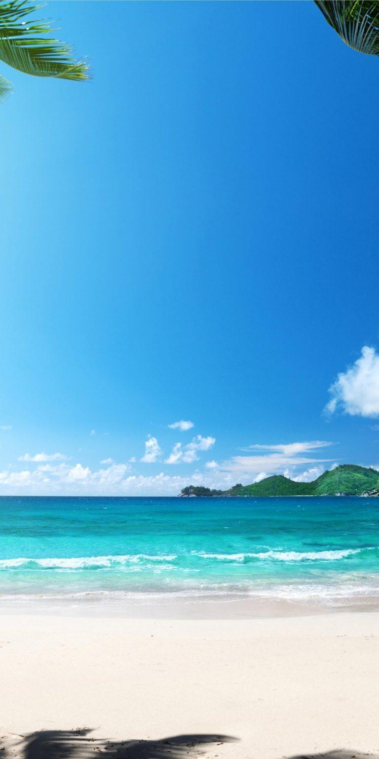 Beach Summer Palms Ocean Tropical 1440x2880 768x1536
