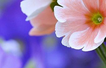 Beautiful Flowers Wallpaper 1080x2280 340x220