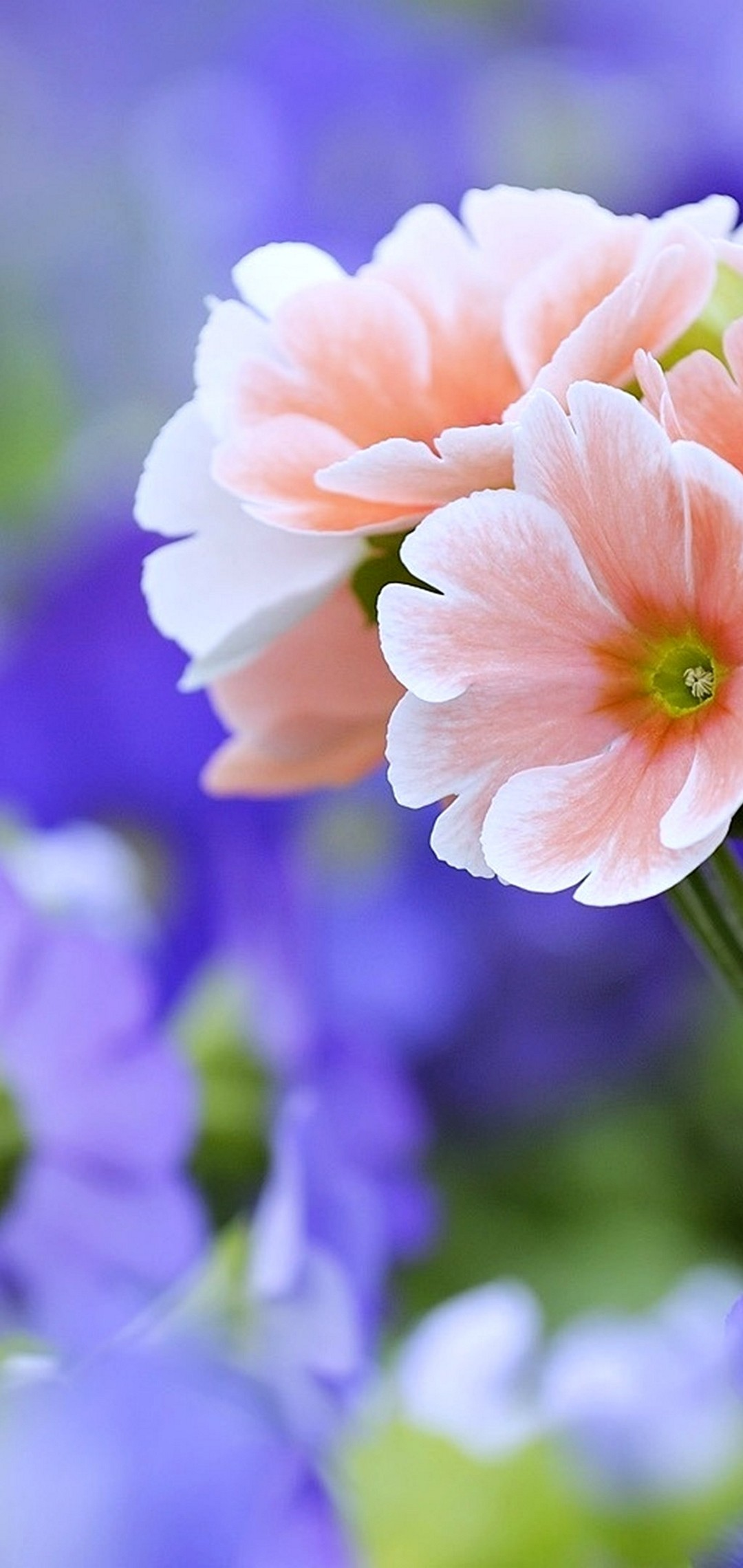 Beautiful Flowers Wallpaper 1080x2280