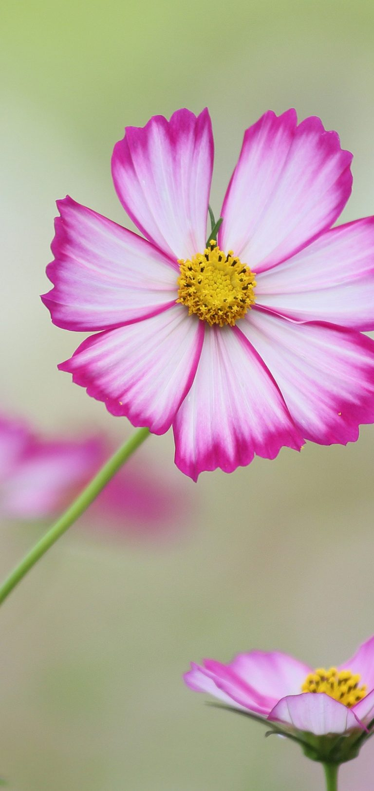 Cosmos Wallpaper 1080x2280 768x1621