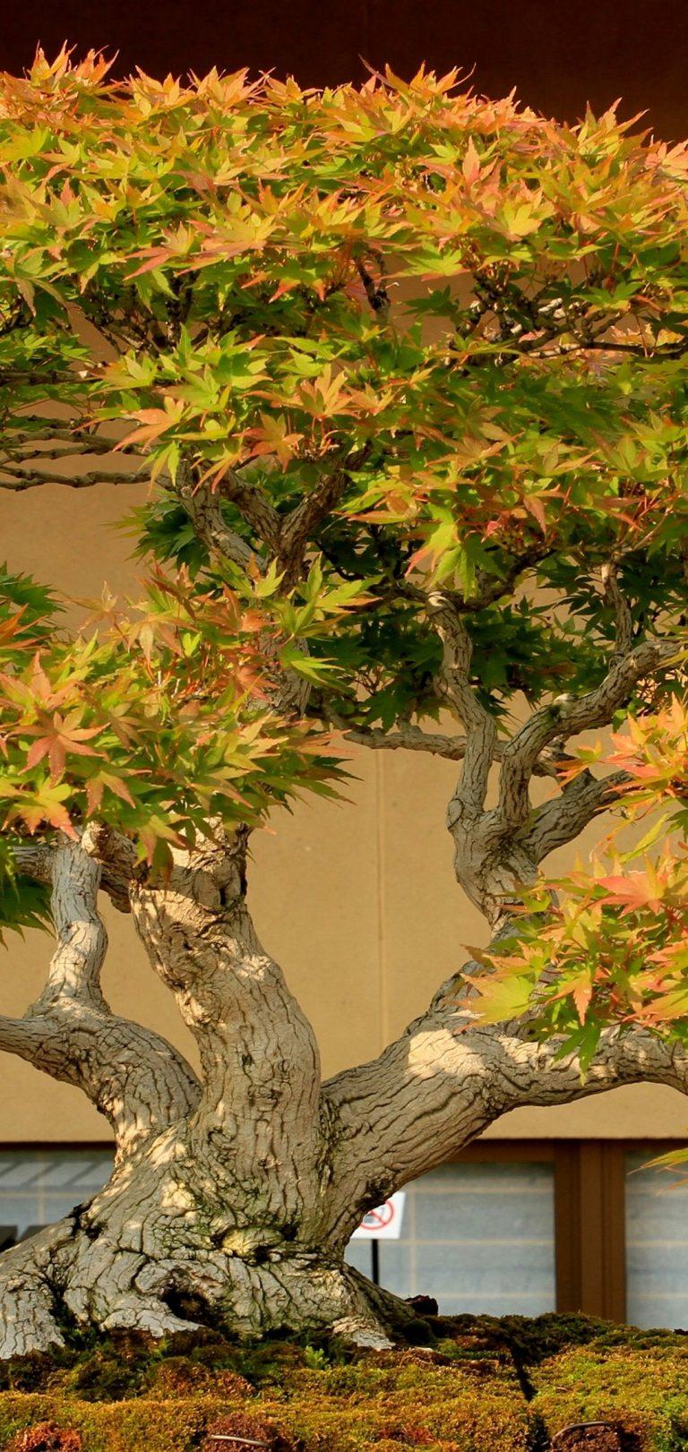 Earth Bonsai 4K Wallpaper 5184x3456 Wallpaper 1080x2280 768x1621