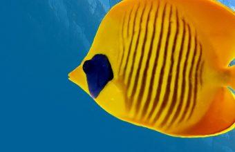 Fish Underwater World Animals 1440x2880 340x220