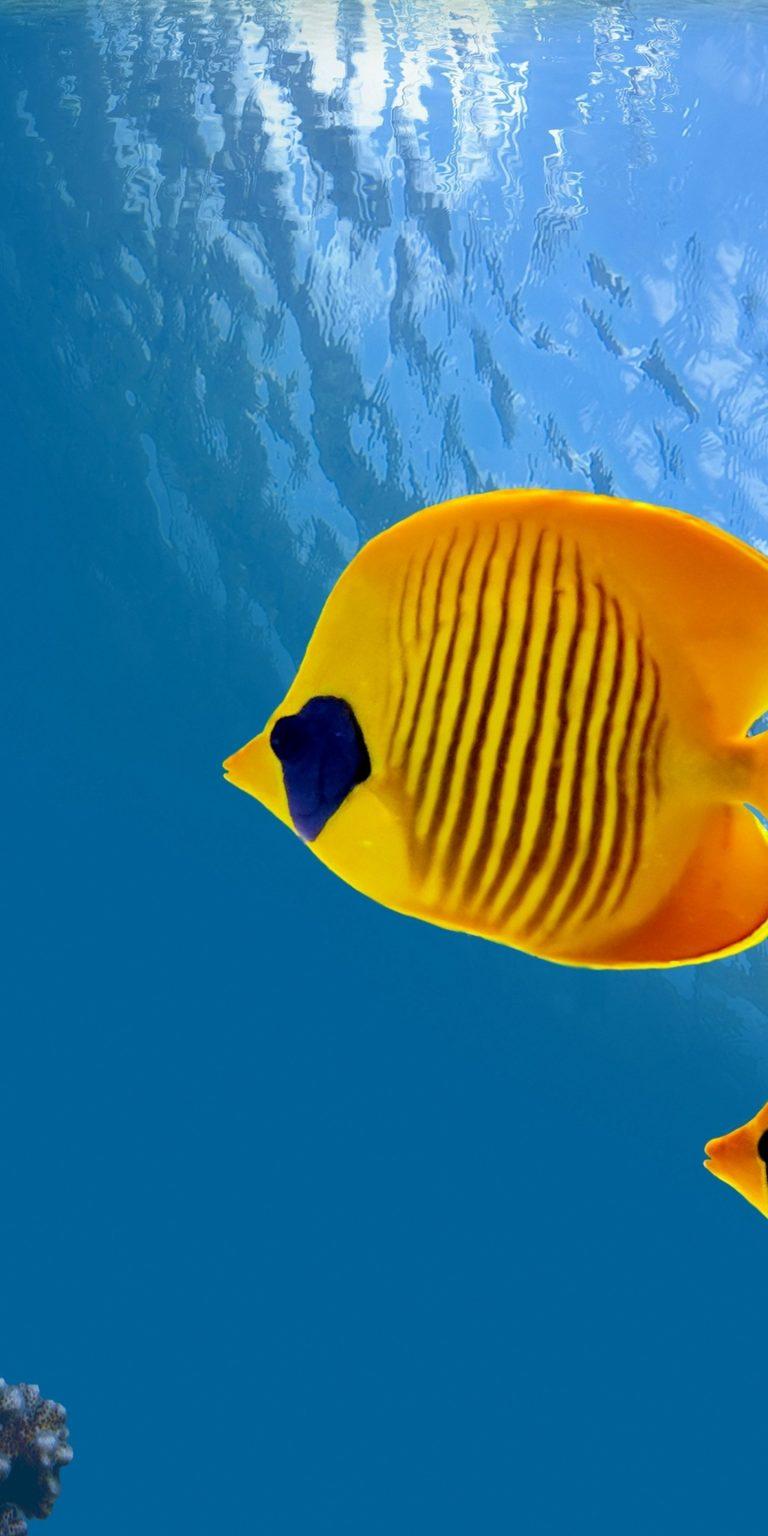 Fish Underwater World Animals 1440x2880 768x1536