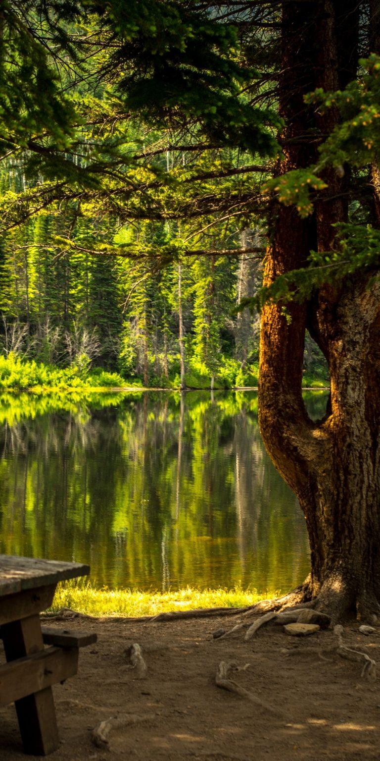 Forest Grass Lake Landscape 1440x2880 768x1536