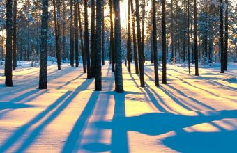 Forest Sunrise Winter Trees 1440x2880 340x220