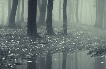 Forests Fog Puddle Nature 1440x2880 340x220
