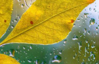Glass Drops Leaves Autumn Bokeh 1440x2880 340x220