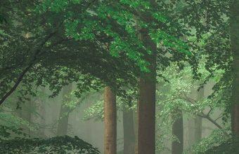 Green Trees 1440x2880 340x220