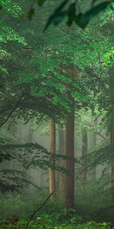 Green Trees 1440x2880 380x760