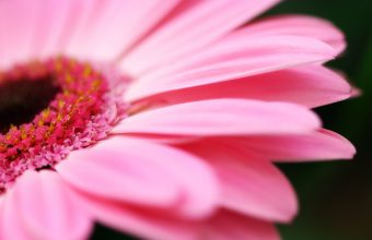Hot Pink Flower Wallpaper 03 2560x1600 340x220