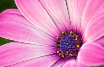 Hot Pink Flower Wallpaper 11 1600x1200 340x220