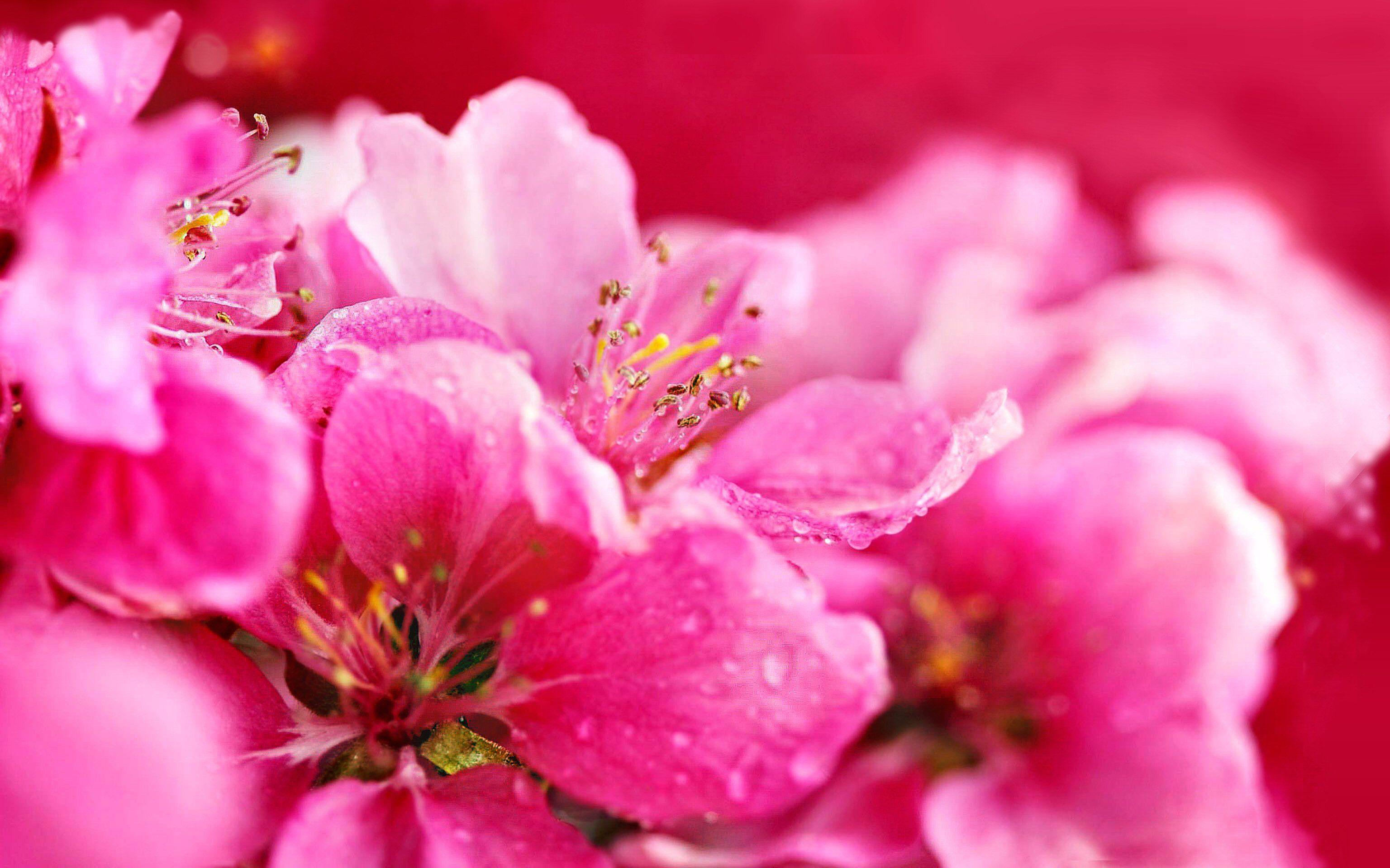 Hot pink flower wallpaper 16 3072x1920 mightylinksfo