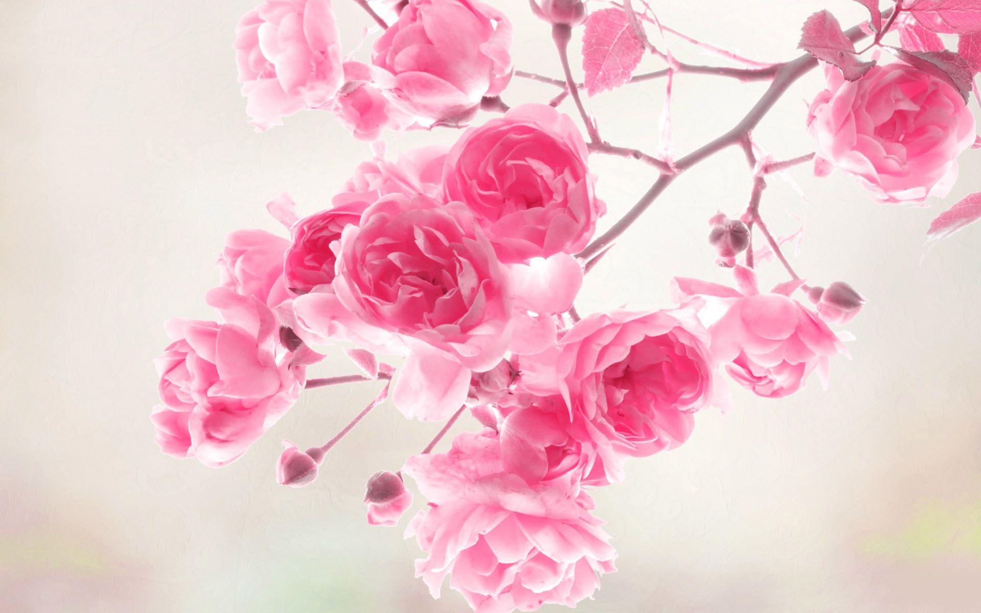 Hot Pink Flower Wallpaper 24 1920x1200
