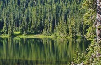 Lake Mountains Trees Landscape 1440x2880 340x220