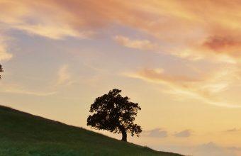 Landscape Sunset Wallpaper 1080x2280 340x220
