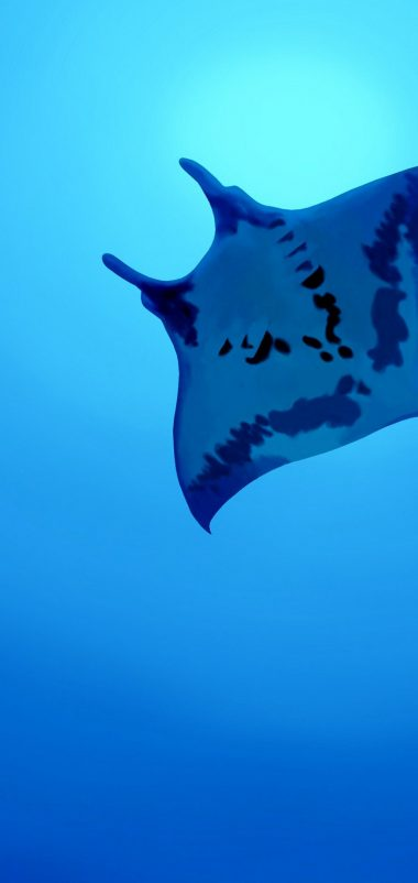 Manta Ray Wallpaper 1080x2280 380x802