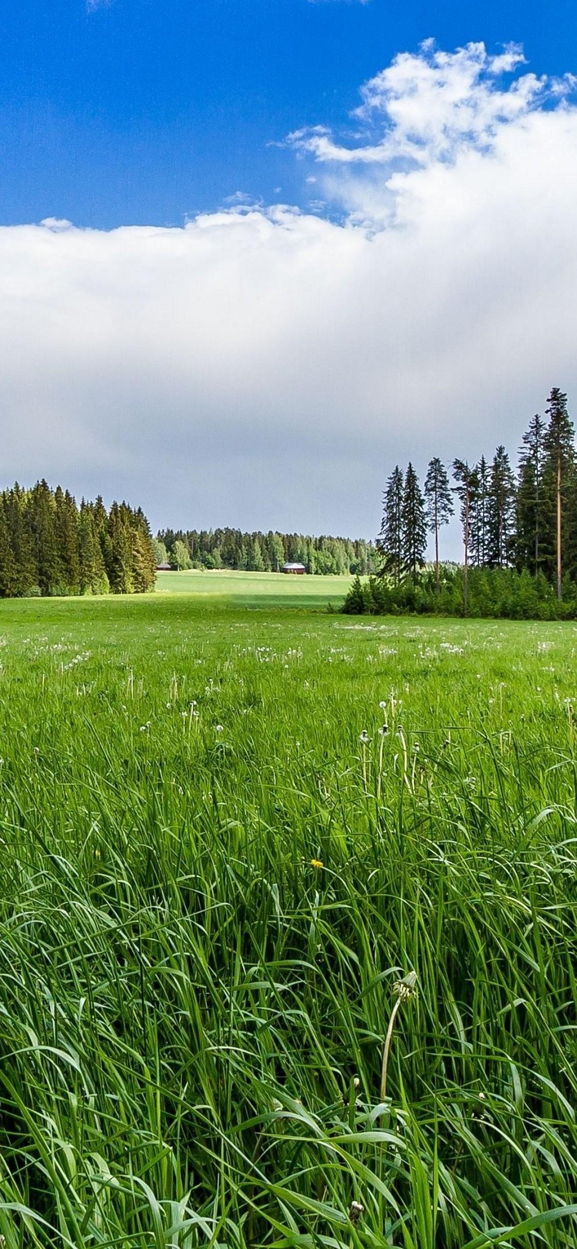 Meadow Forest Sunny Grass Flowers Hd Wallpaper 1125x2436