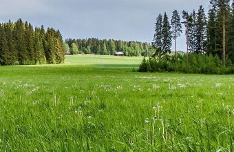 Meadow Forest Sunny Grass Flowers Wallpaper 1080x2280 340x220
