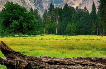 Mountains Trees Landscape 1440x2880 340x220