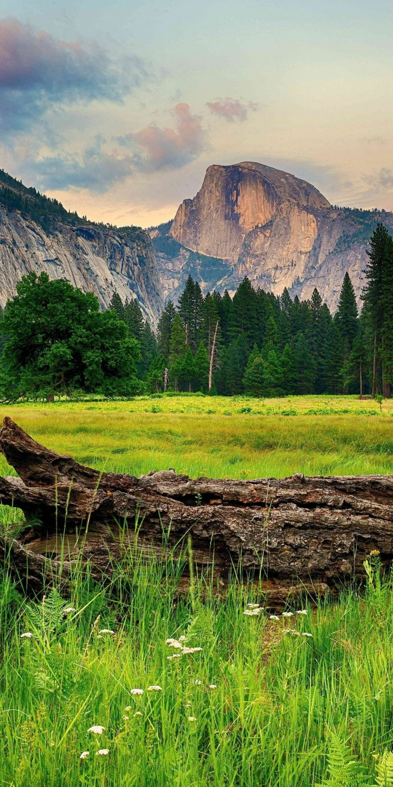 Mountains Trees Landscape 1440x2880 768x1536
