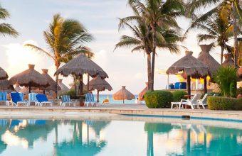 Palm Trees Resort Nature Tropical Pool 1440x2880 340x220