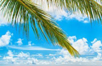 Paradise Sea Summer Ocean Beach 1440x2880 340x220