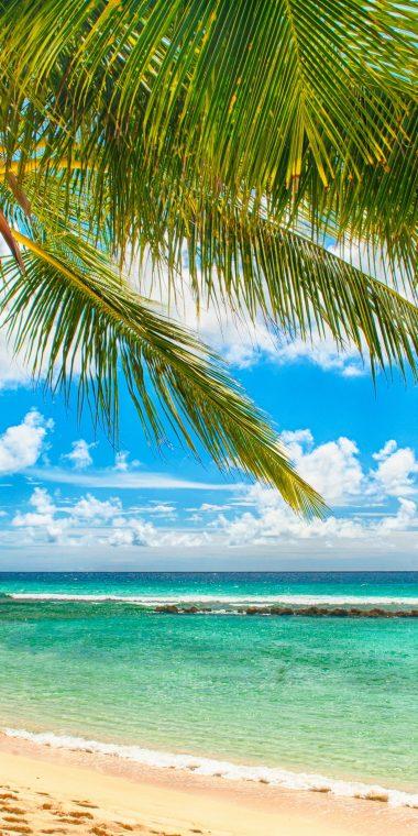 Paradise Sea Summer Ocean Beach 1440x2880 380x760