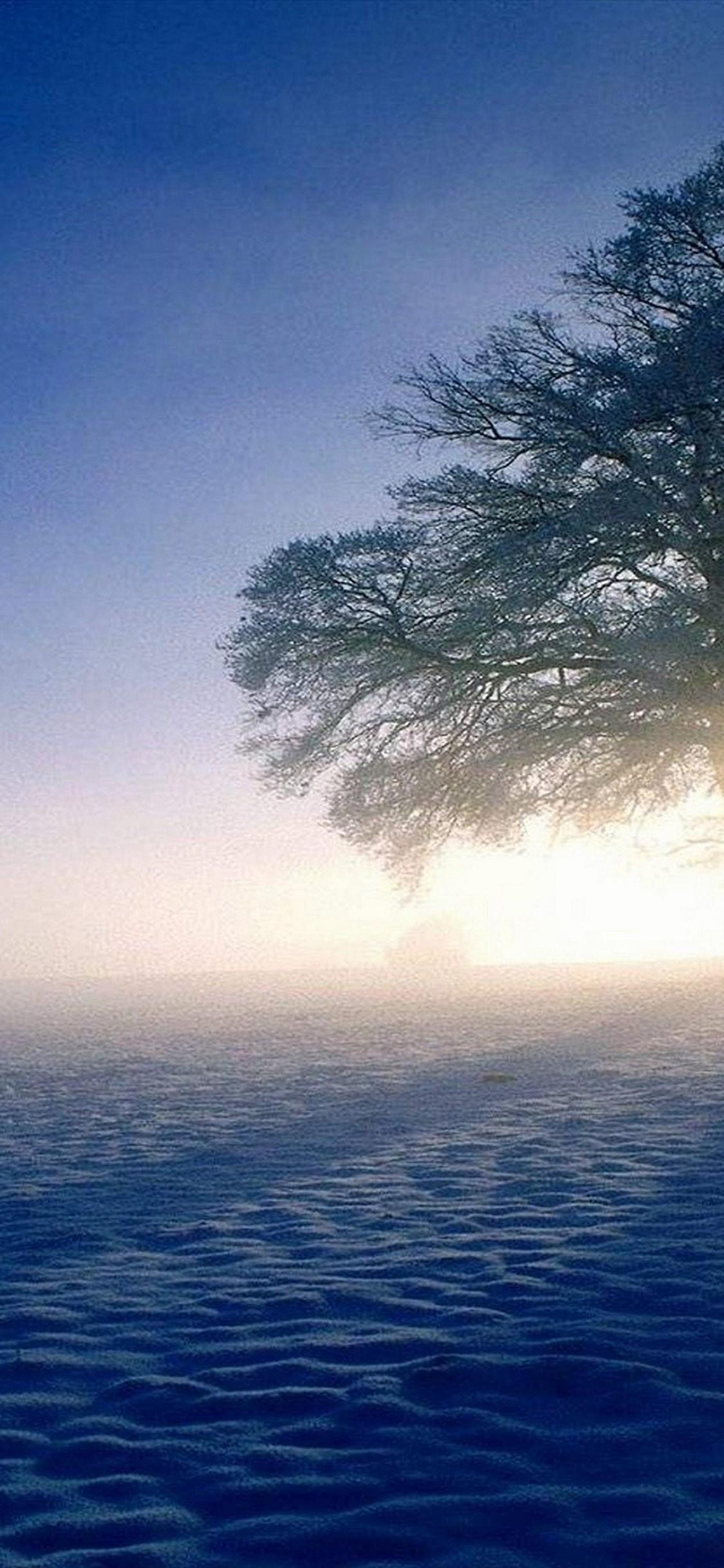 Plandscapes Nature Winter Snow Sun Hd Wallpaper 1125x2436