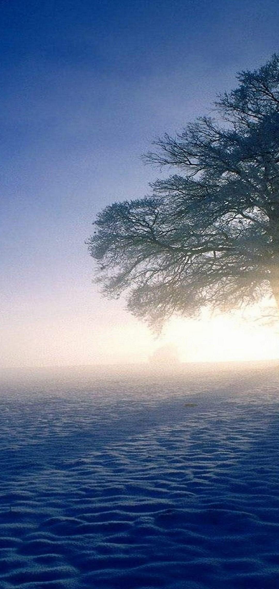 Plandscapes Nature Winter Snow Sun Wallpaper 1080x2280