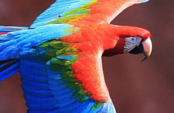 Red And Green Macaw Wallpaper 1080x2280 340x220