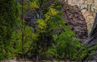 River Trees Rocks Gorge 1440x2880 340x220