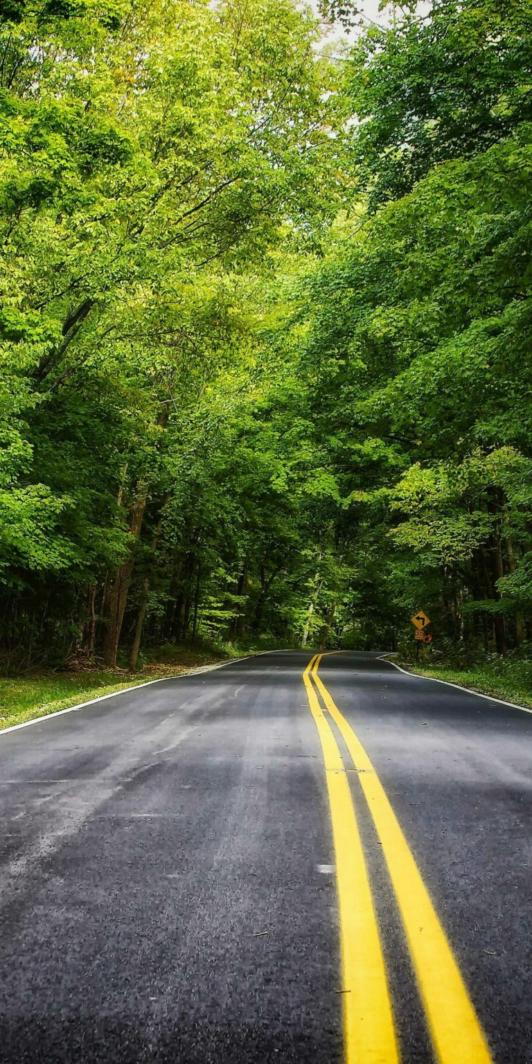 Road Forest Trees Landscape 1440x2880 768x1536