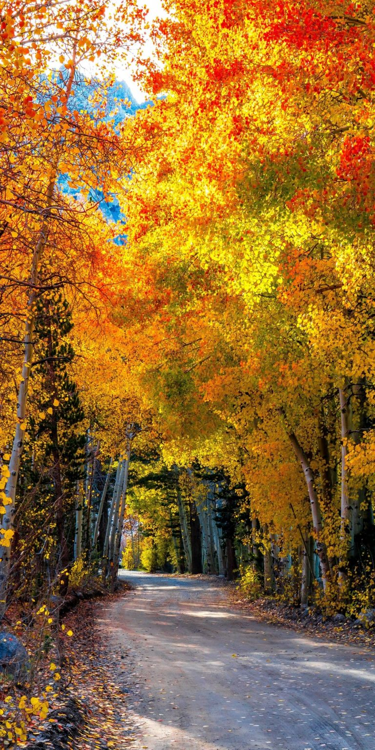 Roads Autumn Forests Trees 1440x2880 768x1536