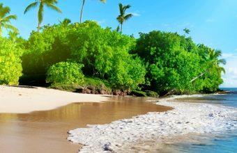 Sunshine Beach Coast Tropical Paradise 1440x2880 340x220