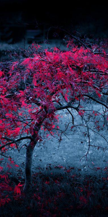 Tree Leaves Fog Light Purple 1440x2880 380x760