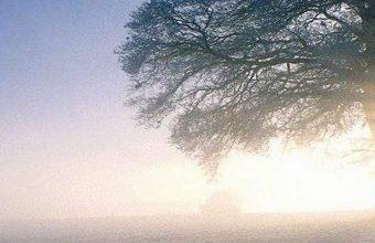 Winter Morning Wallpaper 1080x2280 340x220