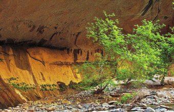 Zion Narrows Rock 1440x2880 340x220