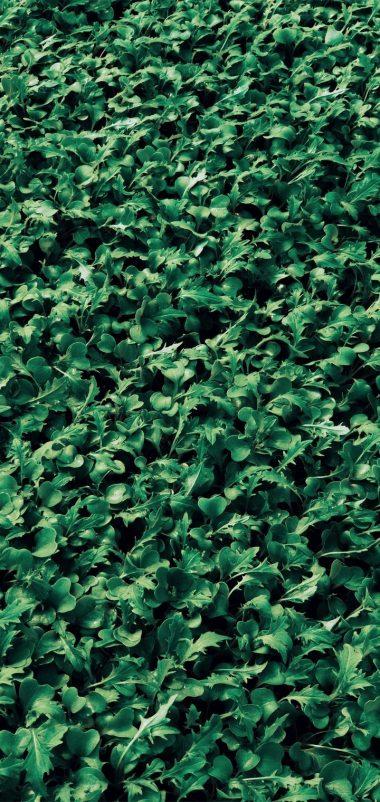 720x1520 Wallpaper 075 380x802