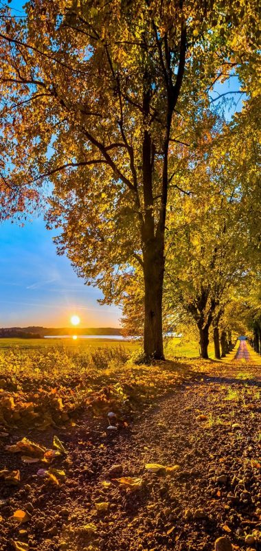 AUTUMN Fall Landscape Nature Wallpaper 720x1520 380x802