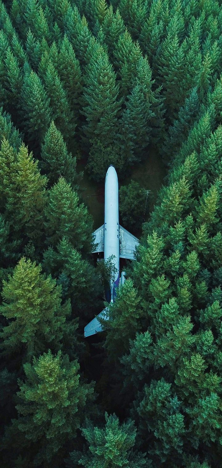 Airplane Trees Top View Wallpaper 720x1520