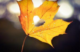 Autumn Heart Bokeh Wallpaper 800x480 340x220
