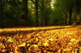 Autumn Leaves On The Ground Wallpaper 800x480 340x220